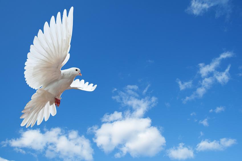 Paloma en el aire con las alas abiertas