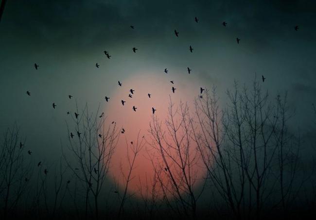 Pájaros lunares